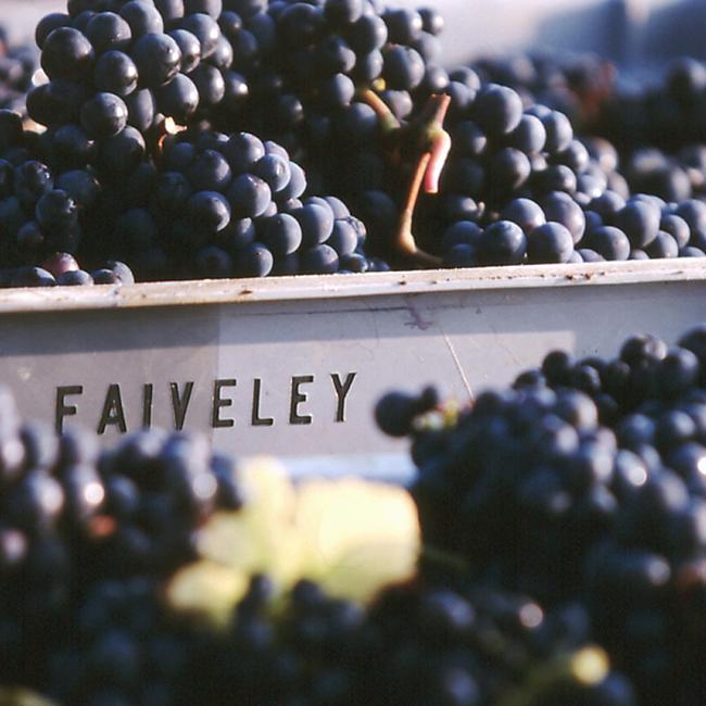 Les vendanges au Domaine Faiveley