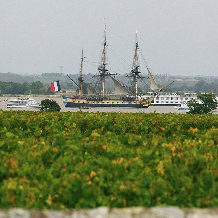 Les vignes au bord de la Gironde