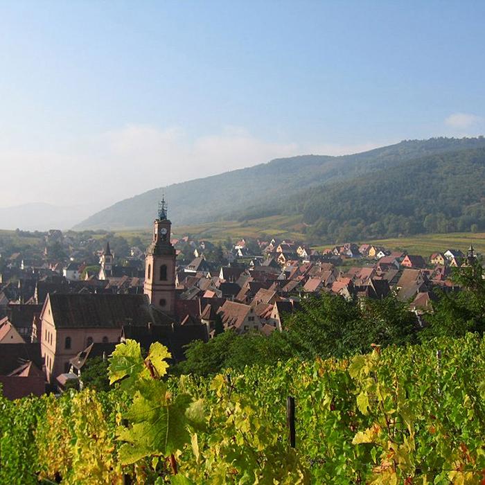 Les vignes de Marcel Deiss à Bergheim