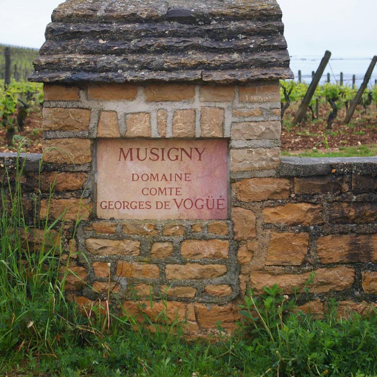 Vignes Musigny Buisson