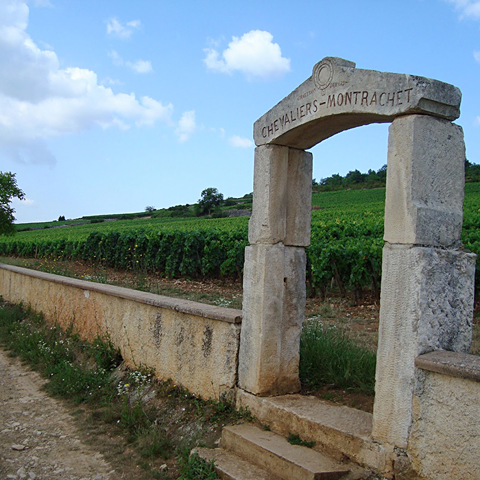 vignoble maison Olivier Leflaive