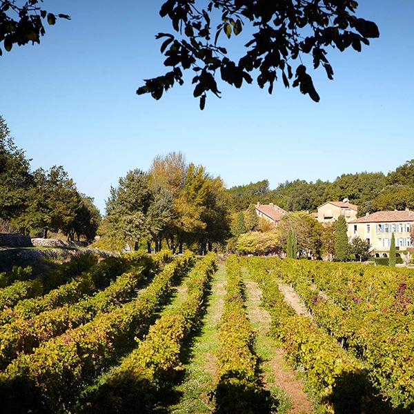 Les vignes du Château Miraval