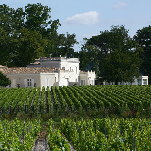 Vignes du Château Gazin