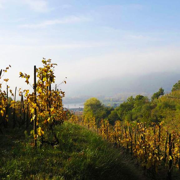 Vignes Combier