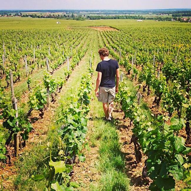 Les vignes du domaine Arnoux-Lachaux