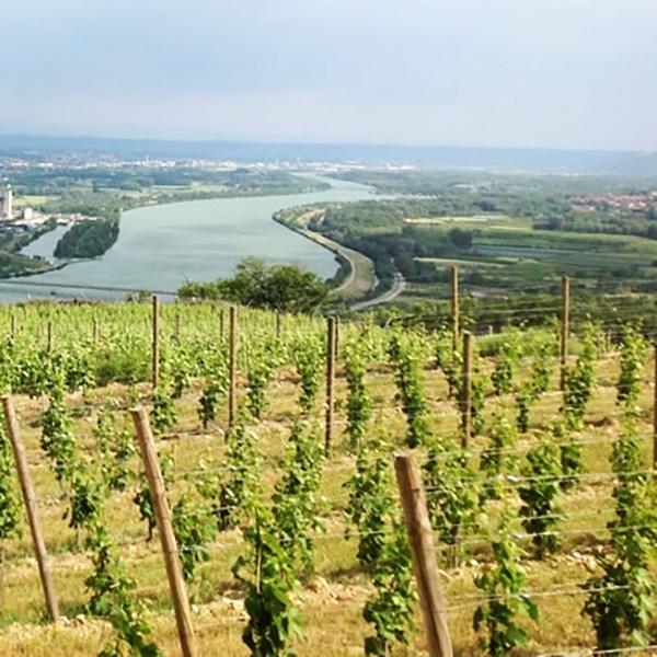 Vignobles du Monteillet